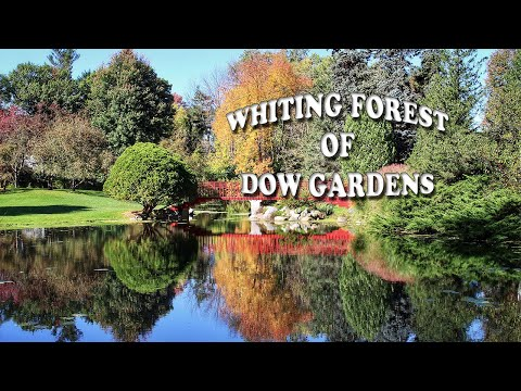 Exploring Whiting Forest of Dow Gardens