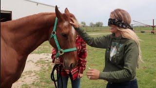 DO I REALLY KNOW MY HORSES?  BLINDFOLDED CHALLENGE!!