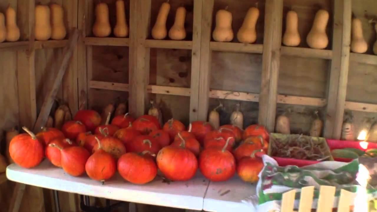 How to store pumpkins - How To Store Pumpkins For Seeds