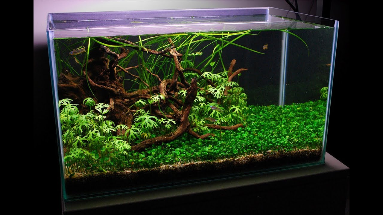 Low Maintenance Semi Biotope Planted Tank | Aquascape TV ...