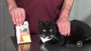 Как обработать кошку от блох и клещей: капли, ошейник, спрей. ВетСовет
