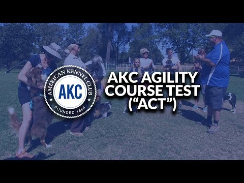 AKC Agility Course Test (ACT)