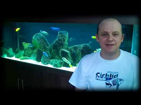 African Cichlid Hub Channel Intro