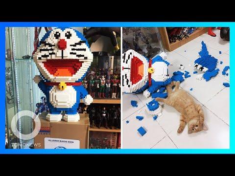 Kucing hancurkan 2000 lebih susunan balok kecil doraemon buatan pemiliknya - TomoNews