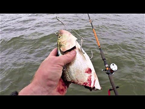 Using BIG BAITS To Chase BIG FISH!! (Lake Fishing)