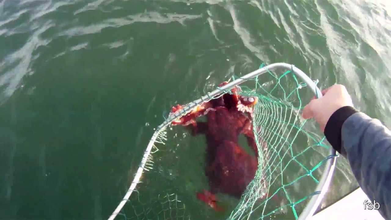 I Caught An Alaskan Sea Monster Youtube
