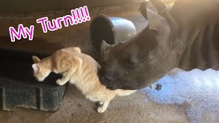 Funny Moments Baby Rhino - The Pet Collective SS 03