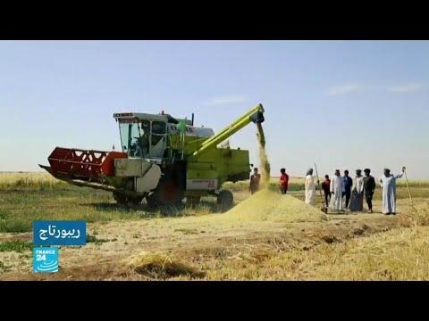 المزارعون العراقيون وجائحة كورونا.. رب ضارة نافعة  - نشر قبل 5 ساعة