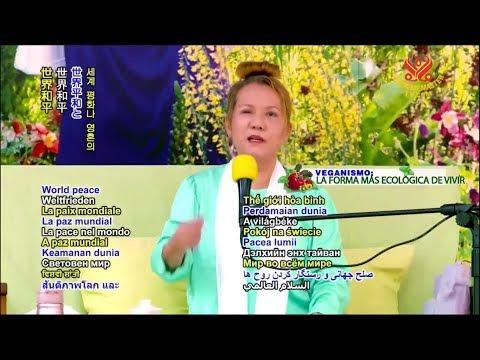 Supreme Master Television Live Stream  2017-11-18