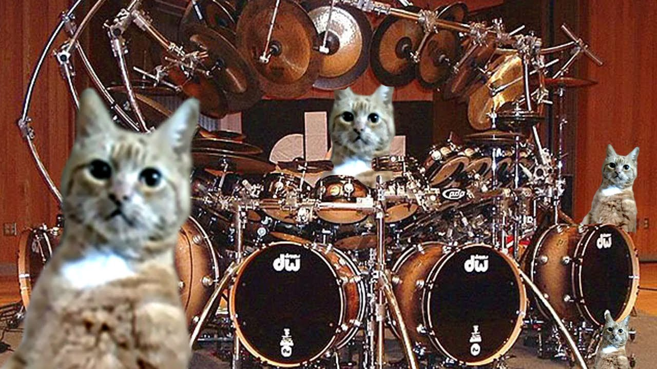 Cat Playing Drums Youtube