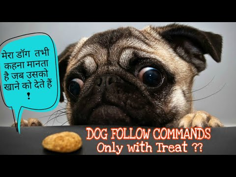 dog-follow-command-only-with-treat-|डॉग-तभी-कहना-मानता-है-जब-उसको-खाने-को-देते-हैं?---dog-training