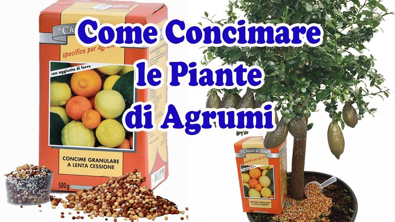 Calendario Concimazione Agrumi.Concime Chicchi Di Sole 10 Kg Per Piante Di Agrumi