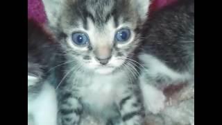 Мои любимые котята)
