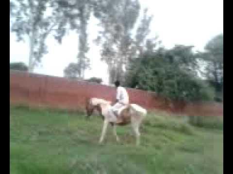 veera the great (horse rider)