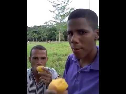 Comiendo mango wellington Qiu y lucas