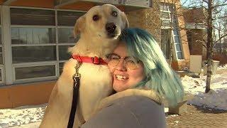 Shelter dogs get temporary home for holidays through adoption programs