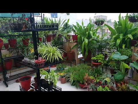 My Plants Enjoying Rain || Happy Monsoon From Fun Gardening || My Plants In Rain || Fun Gardening