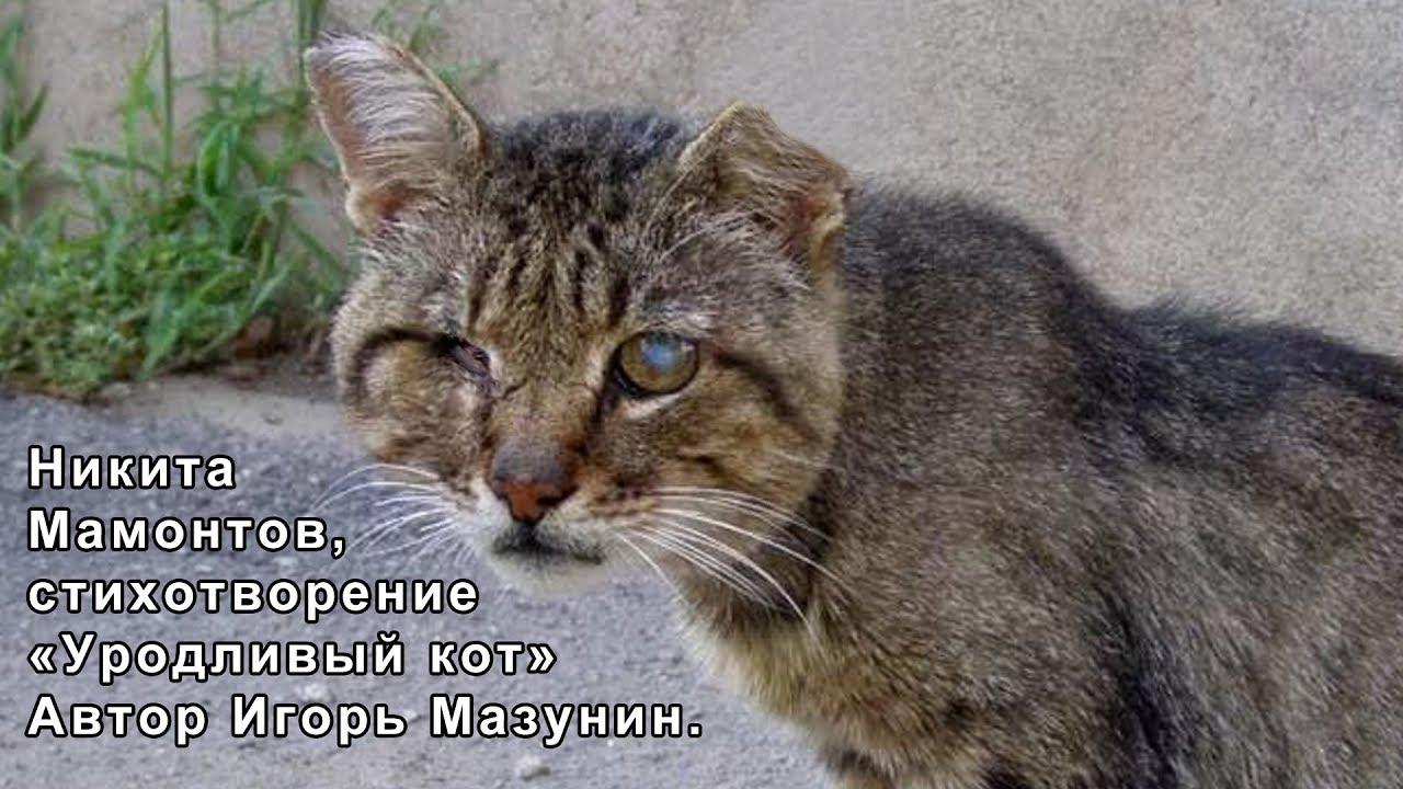 гигантским уродливый кот стих картинка подобрали наиболее оригинальные