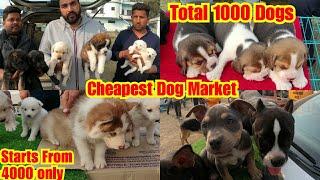 Dog Market Outside Dog Show Nawanshahar Punjab | Cheapest Dog Market