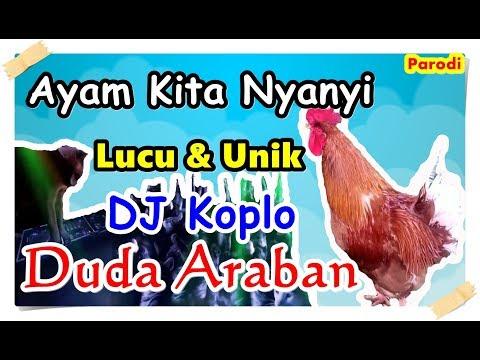 Hebat ! Ayam Kita Nyanyi Duda Araban | Koplo Full Lyric ( Ayam Cover )