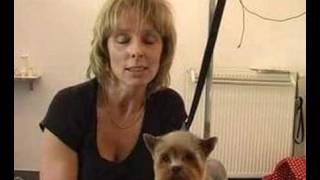 Ciekawe Zawody: Psi Fryzjer (1)