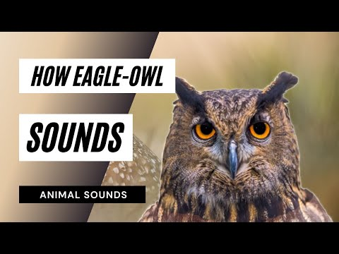 The Animal Sounds:  Eagle-Owl Noises - Sound Effect - Animation