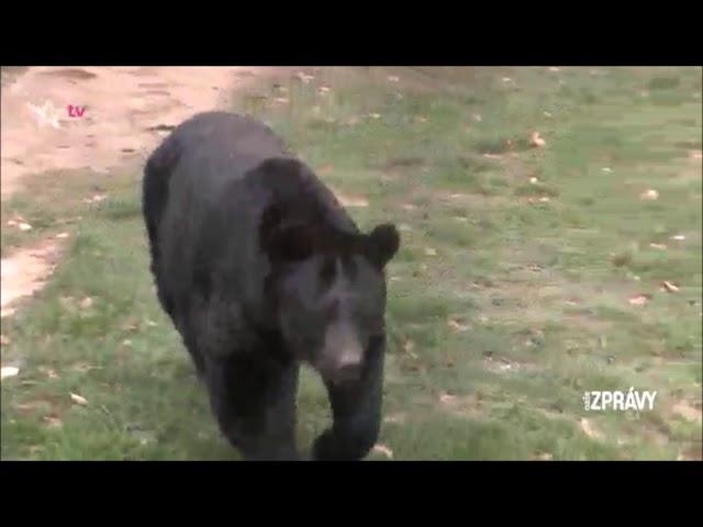 Reportáž TV Barrandov