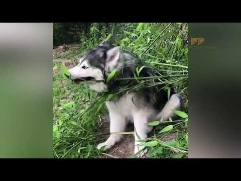 Cute Dog Breaking with the ball - PETS PRODUCTIONS - Laugh 2