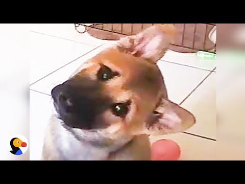 Dogs React To Robot Giving Them Snacks | The Dodo