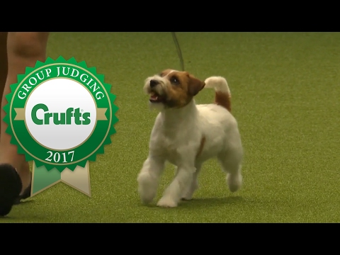 Terrier Group Judging and Presentation | Crufts 2017