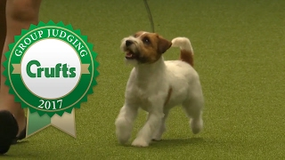 Video Terrier Group Judging and Presentation | Crufts 2017 download MP3, 3GP, MP4, WEBM, AVI, FLV November 2017
