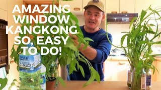 Window Kangkong Container Garden Plus The Big Banana