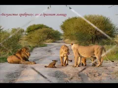 Смешные животные -