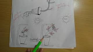 Plants Hormones|| Control & Co-ordination||Biology Class 10th|| Science ||CBSE Board Exam