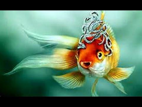 GS2858  Кто ОН МОЯ РыБКА , рыбка ли ЗОЛОТАЯ????