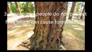 Essay On Paper Climate Change  With Bill Nye National Geographic This Video Describes  The Causes And Effects Of Deforestation Particularly In The Amazon High School Argumentative Essay Examples also The Yellow Wallpaper Essay Topics Deforestation Causes And Effects Essay  Raceswimmingorg Thesis For Argumentative Essay