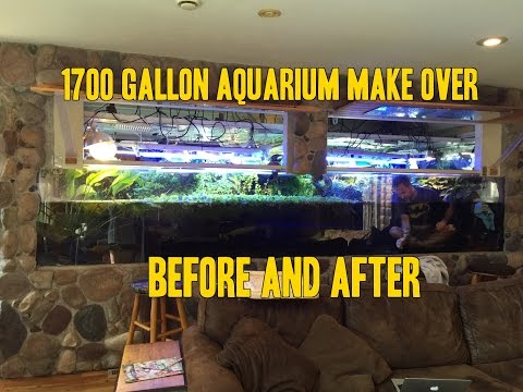 1700 gallon Aquarium Vivarium AquaScaping Before and After