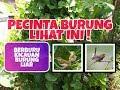 Berburu Kicauan Burung Prenjak Liar Part  Kicau Mania Gacor Prenjak Keluarga Binar   Mp3 - Mp4 Download