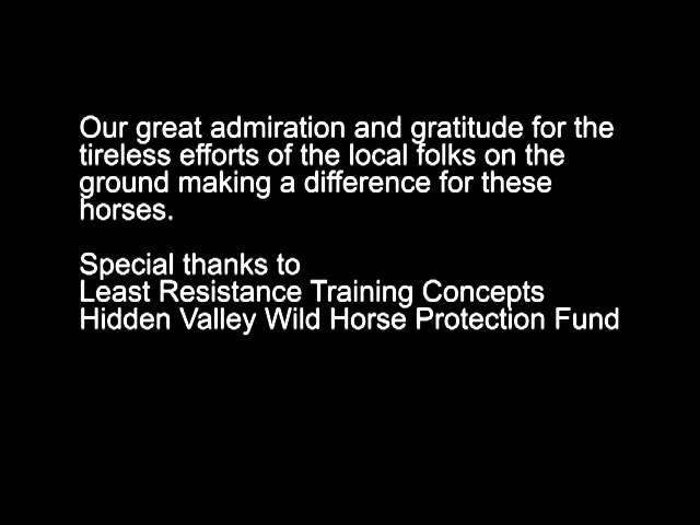 RESCUED! Virginia Range Wild Horses Sent to Slaughter