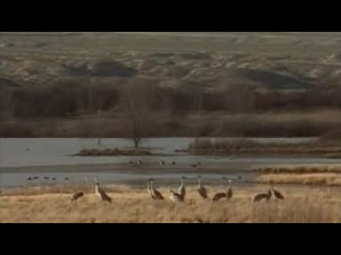 Americas Wildest Places Bosque del Apache National Wildlife Refuge, New Mexico