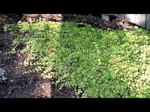 Drought - tolerant ground cover garden