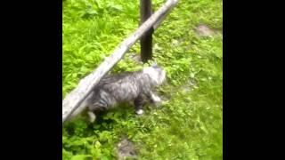 коты делят участок
