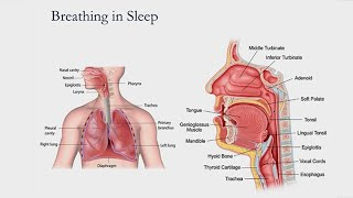 Snoring and Sleep Apnea: What is It and How Do I Stop?