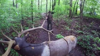Video 2016 Tennessee Classic traditional archery festival recap by Damon Bungard download MP3, 3GP, MP4, WEBM, AVI, FLV Juli 2018