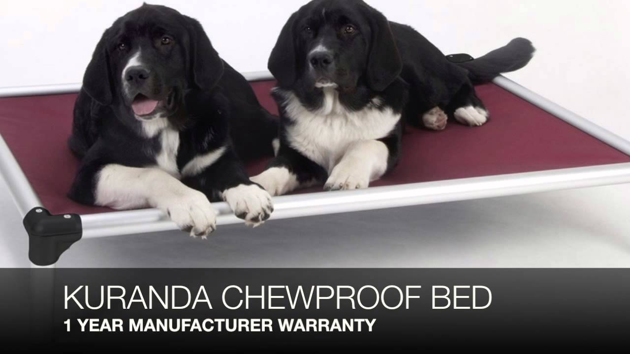 Kuranda Chew Proof Dog Bed review - YouTube