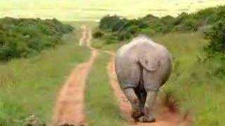 Moonwalking Rhino cant stop pooing