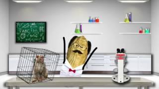 crazy peanuts a day in the laboratory of professor pi