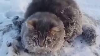 Кошка примёрзла под машиной