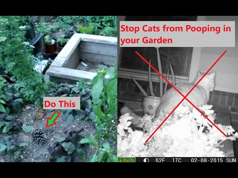 How To Stop Cats Pooping In Garden Beds Using This Simple Natural Flower