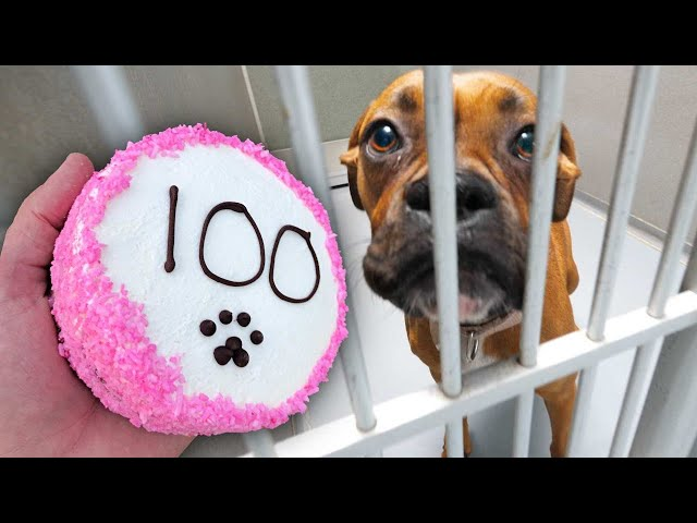 Baking 100 Dog Cakes For Homeless Dogs!